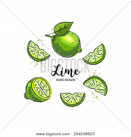 Lime Fruit Drawing, Half And Slice Of Lemon. Watercolor Limes On A White Background. Vector Illustra
