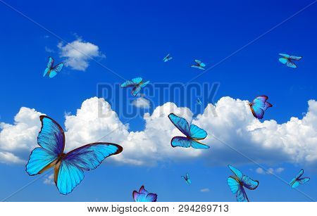 Bright Butterflies Flying In The Blue Sky With Clouds. Flying Blue Butterflies. Morpho Butterflies.