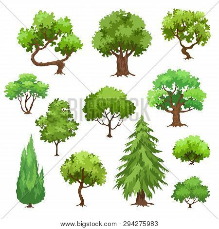 Green Trees, Pine And Bushes Vector Illustration Isolated On White Background. Collection Of  Trees