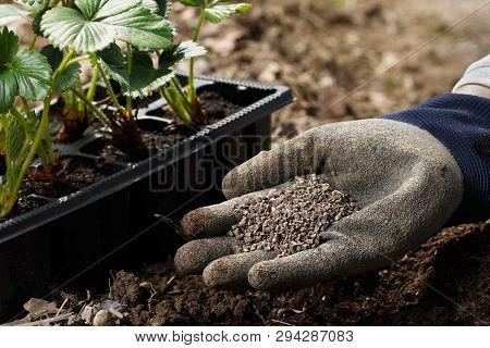 Gardener Blending Organic Fertiliser Humic Granules With Soil, Enriching Soil For Plants To Grow Opt