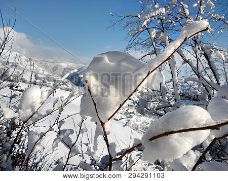 Ramas Y árboles Cargados De Nieve En Rumania, Pueblo De Parva, Transilvania