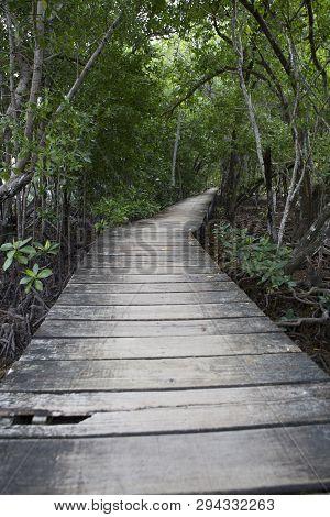 Wooden Footbridge In Jungle Mangrove Forest, Seychelles