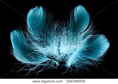 Blue Bright Textured And Soft Plumes Isolated On Black