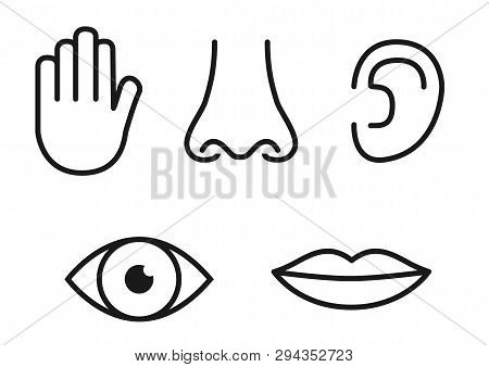 Outline Icon Set Of Five Human Senses: Vision Eye , Smell Nose , Hearing Ear , Touch Hand , Taste Mo