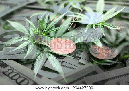 Marijuana Penny Stocks High Quality Stock Photo