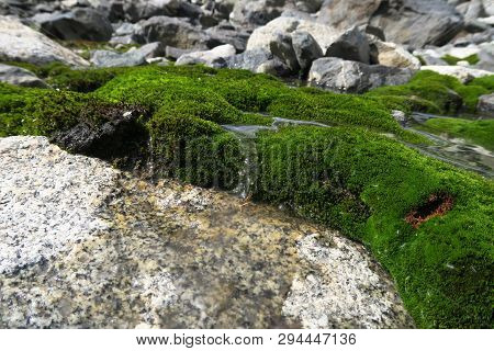 Moss-covered Rocks. Beautiful Moss And Lichen Covered Stone. Background Textured In Nature