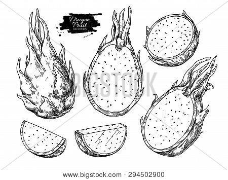 Dragon Fruit Vector Drawing Set. Hand Drawn Tropical Food Illustration. Engraved Summer Dragonfruit