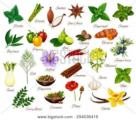 Spices And Cooking Herbs, Herbal And Vegetable Or Fruit Seasonings. Vector Culinary Condiments Peril