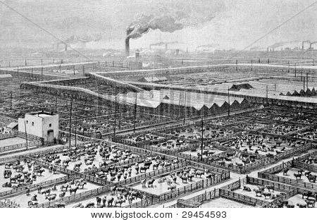 Central slaughterhouse in Chicago. Engraving by Maynar from picture by painter Taylor. Published in magazine