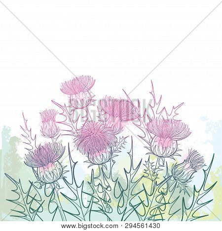 Vector Thickets Of Outline Welted Thistle Or Carduus Plant, Spiny Leaf, Bud And Flower Bunch In Past