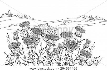 Vector Thickets Of Outline Thistle Or Carduus Plant, Spiny Leaf, Bud And Flower In Black On The Whit