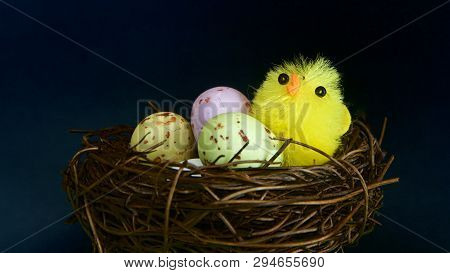 A Young Chick Amongst Easter Eggs To Celebrate New Life.
