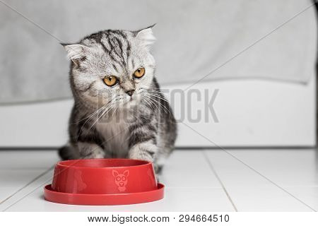Cat Eating Food In The Food Tray Red.