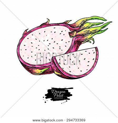 Dragon Fruit Vector Drawing. Hand Drawn Tropical Food Illustration. Pink Summer Dragonfruit.