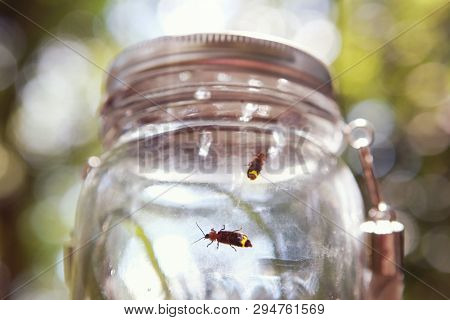 Soft focus fireflies in a jar, shallow focus on glass