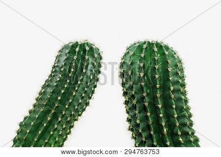 Two Cactus Closeup On Light Background. Spiny Cactus. Green Plant. Selective Focus