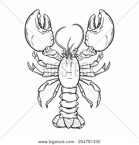 Lobster, Crayfish Hand Drawn Outline Illustration. Crawfish, Crustacean Ink Pen Sketch. Seafood Rest