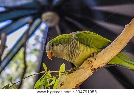 A Green Parrot Sits On The Brench