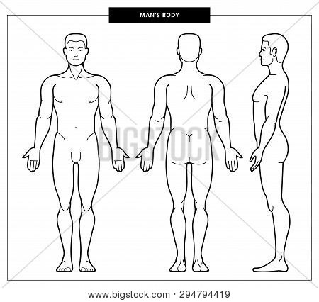 Vector Illustration Of Men Body And Man Anatomy. Front, Back Side Views. Outline Vector Illustration