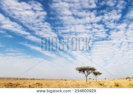 Acacia trees in the Masai Mara, Kenya. Typical cloud formation of an African sky.