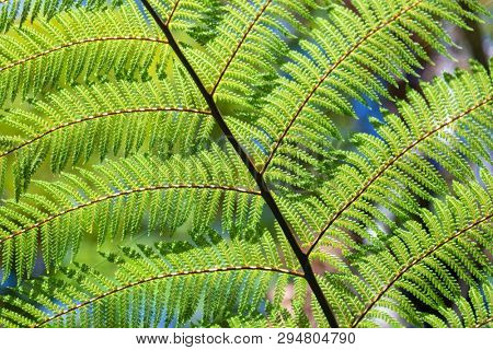 An image of a typical fern leaf in New Zealand