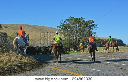 Christchurch, New Zealand - April 09. 2019: Farmers  Horse And Dog Mustering Cattle On Banks Peninsu