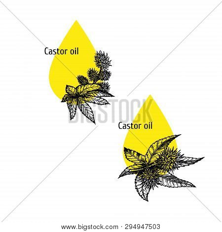 Castor Oil Icon Set. Hand Drawn Sketch. Extract Of Plant. Vector Illustration