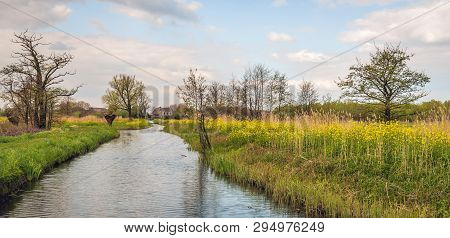 Panoramic Colorful Dutch Landscape In The Spring Season With Yellow Flowering Rapeseed On The Bank O