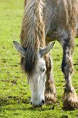 Kentucky Horse Farm near Lexington KY USA poster