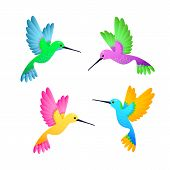 Colorful hummingbird set. Cute little birds with bright feathers. Can be used for topics like nature, ornithology, exotic birds poster