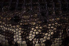 The Crocodile Skin Texture.