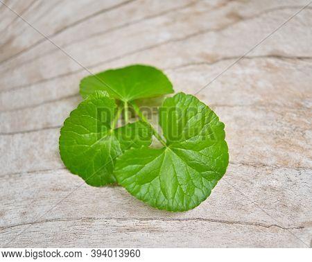 Centella Asiatica(linn.), Asiatic Pennywort Leave  ;gotu Kola Leave On Wood Background. ;herb For He