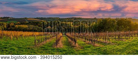 Vineyard Sunrise In Bordeaux Vineyard, France, High Quality Photo