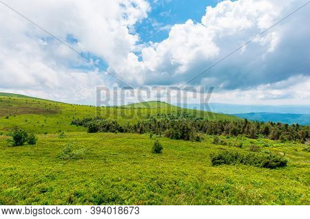 Alpine Meadows Of Mnt. Runa, Ukraine. Coniferous Forest In The Distance. Beautiful Nature Scenery Of