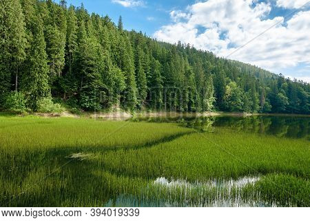 High Altitude Mountain Lake Among The Forest. Spruce Trees On The Shore. Beautiful Nature Scenery On