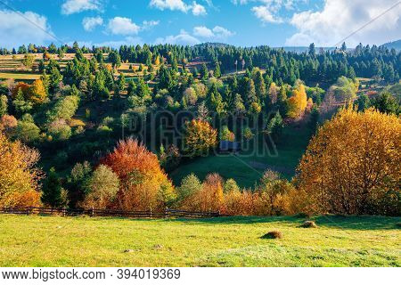 Autumnal Rural Landscape In Mountains. Grass On The Hill, Trees In Colorful Foliage. Beautiful Natur