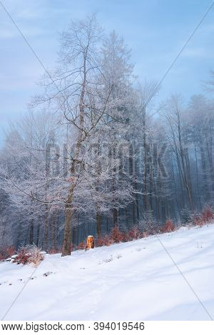 Forest On A Snow Covered Slope. Trees In Hoarfrost. Mysterious Foggy Weather In The Morning. Beautif