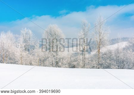 Trees In Hoarfrost On A Snow Covered Meadow. Wonderful Wintertime Scenery On The Frosty Morning In M