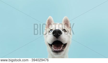 Close-up Husky Puppy Dog With Colored Eyes And Happy Expression. Isolated On Blue Background.
