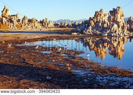 Numerous colonies of various birds live on the shores of the lake Mono. Magic sunrise on the lake. Mono Lake is a salt lake in California. The natural wonder of the world