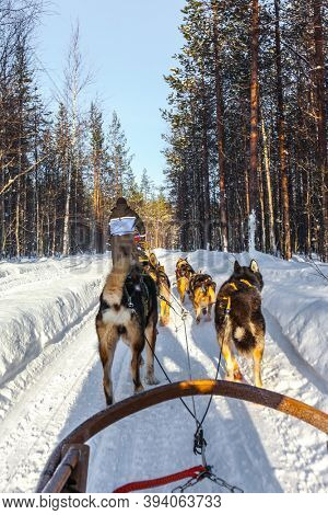 The toboggan run is rolled in deep snow. Team of husky dogs carries sledges with tourists. The sun is low on the horizon. Travel to Santa Claus. Arctic. Lapland