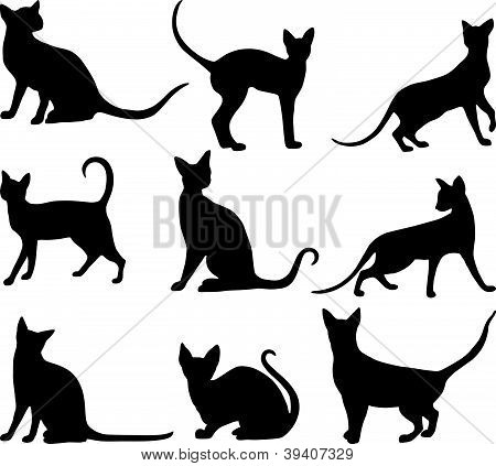Cats Black.eps