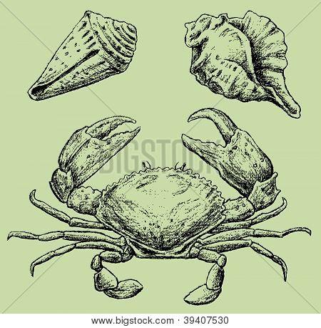 Krab en schelpen.