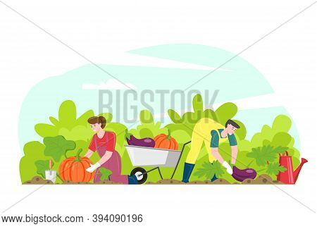 Gardening People Gathering Harvest, Vector Illustration. Smiling Couple Farmers Cartoon Characters W