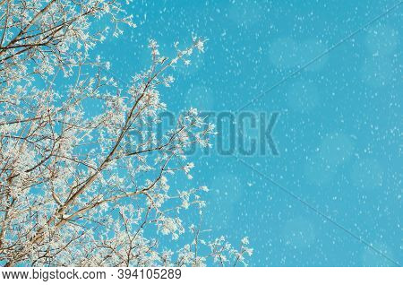 Christmas winter snowy background. Winter snowy tree branches under falling snow, closeup of winter forest nature with free space for Christmas text, Christmas winter nature, Christmas winter landscape