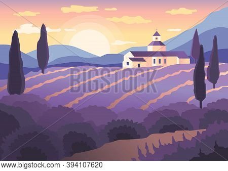 Landscape Sunset In Provence, Blooming Lavender Fields Of Provence