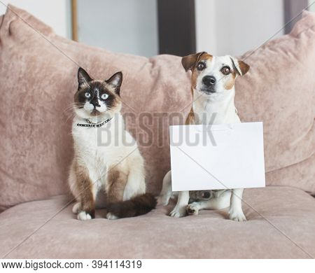 Cute dog and cat at home with empty blank card. Pets friends in living room on sofa