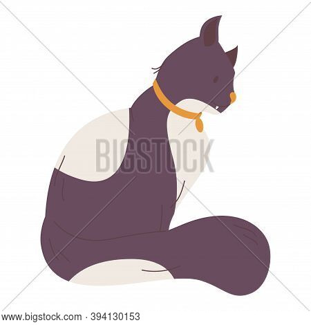 Dark Fur Cat With White Spots. Vector Pet Character With Collar Isolated On White.