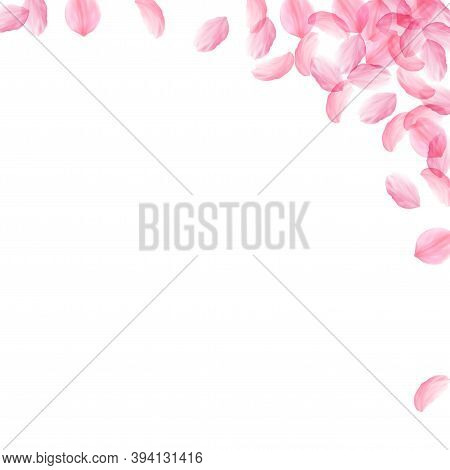 Sakura Petals Falling Down. Romantic Pink Silky Big Flowers. Thick Flying Cherry Petals. Square Righ