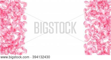 Sakura Petals Falling Down. Romantic Pink Silky Big Flowers. Thick Flying Cherry Petals. Wide Border